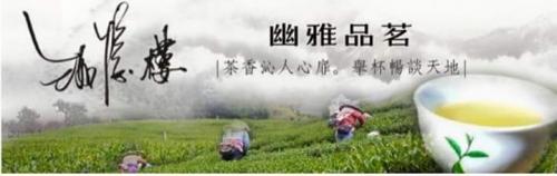 2016年春茶採收